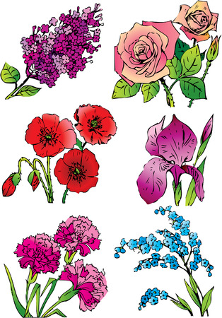 Beautiful collection of flowers on a white background. Vector art-illustration. Vector