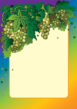 multivitamins: Group of ripe grapes with sample text. Healthy food. Vector art-illustration.