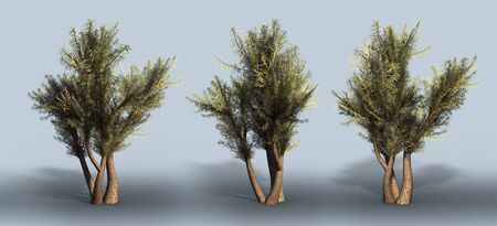 Trees on a grey background. 3D art-illustration. Stock Illustration - 5960479