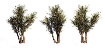 Trees on a white background. 3D art-illustration. Stock Illustration - 5960481