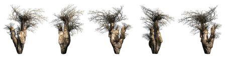 Trees on a white background. 3D art-illustration. Stock Illustration - 5960491
