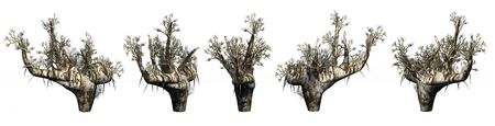 Trees on a white background. 3D art-illustration. Stock Illustration - 5960492