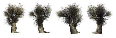 Trees on a white background. 3D art-illustration. Stock Illustration - 6015165