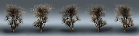 Trees on a grey background. 3D art-illustration. Stock Illustration - 6015171