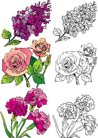 claveles: Colecci�n de flores sobre un fondo blanco. Vector de arte-ilustraci�n.