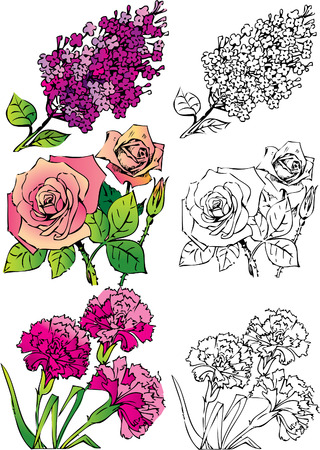carnations: Collection of flowers on a white background. Vector art-illustration.