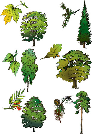 Trees and their leaves. Vector art-illustration. Stock Vector - 6032895