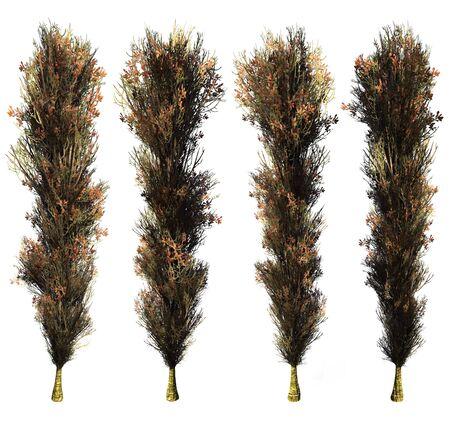 poplar: Poplar on a white background. 3D art-illustration.