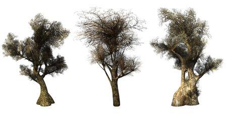 Trees on a white background. 3D art-illustration. Stock Illustration - 6033004
