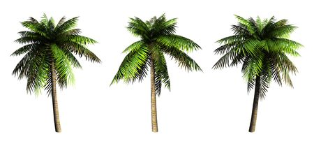 bole: Palms on a white background. 3D art-illustration.