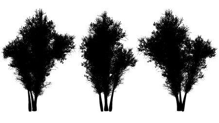 Silhouettes of autumn trees on a white background. 3D art-illustration. Stock Illustration - 6032970