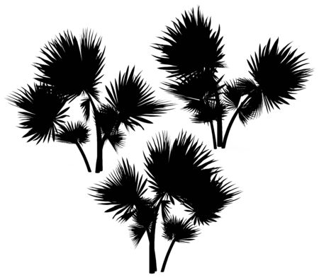 bole: Silhouette of palms on a white background. 3D art-illustration.