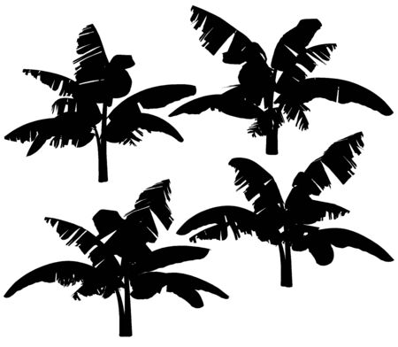 banana leaf: Silhouettes of the banana tree on a white background.