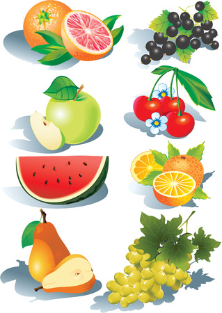 eatable: Various juicy fruits on a white background.  Healthy food. Vector art-illustration. Illustration
