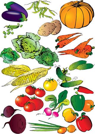cucumber salad: Colecci�n de diferentes verduras sobre un fondo blanco. Vector de arte-ilustraci�n.