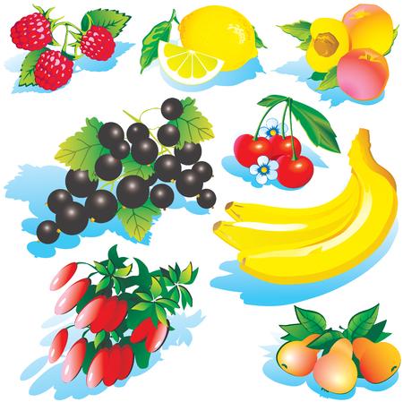 fruited: Various juicy fruits on a white background. art-illustration. Illustration