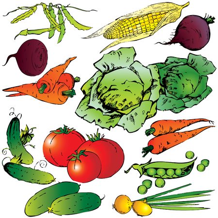 eatable: Collection of different vegetables on a white background. art-illustration.