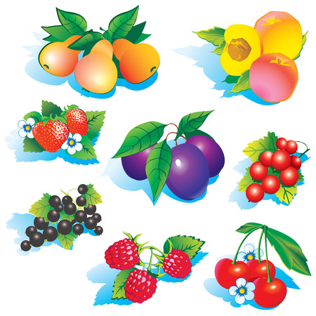 fruited: Fruits on a white background. art-illustration. Illustration