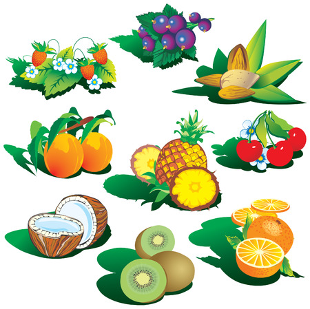 eatable: Fruits on a white background. art-illustration. Illustration