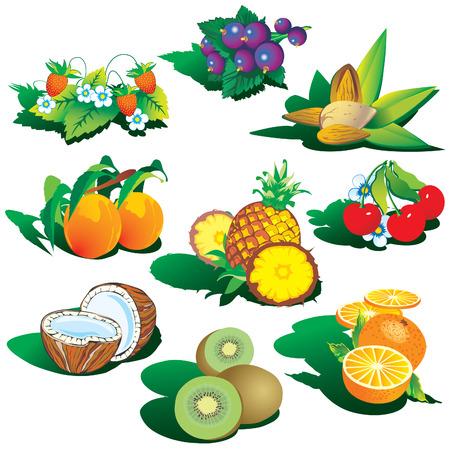 amande: Fruits sur un fond blanc. art-illustration. Illustration