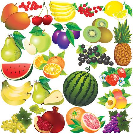 eatable: Fruits on a white background  art-illustration.
