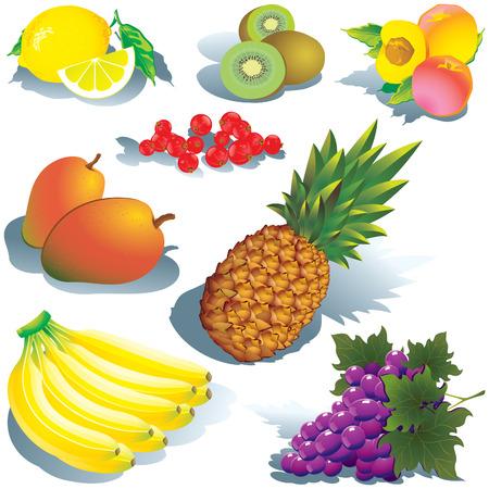 Fruits on a white background.  art-illustration. Stock Vector - 7158122