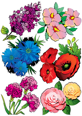 Beautiful collection of flowers. Vector art-illustration on a white background. Vector