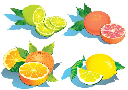 citric: Set of citrus fruits - lemon, orange, grapefruit and lime.