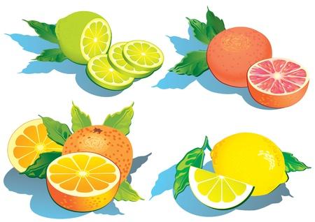 Set von Zitrusfrüchten - Zitronen, Orangen, Grapefruit und Limone.