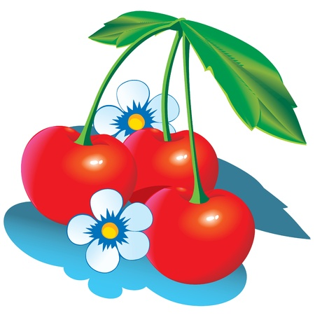 lively: Cherry with green leaves. Vector illustration on a white background. Illustration