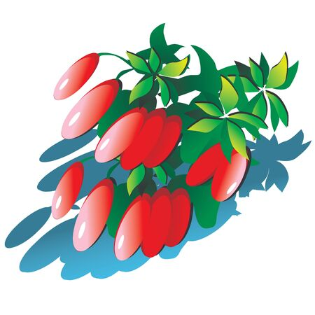 multivitamins: Barberry on a white background. Healthy food. Vector art-illustration.