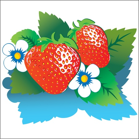 Strawberry with green leaves. Vector illustration on a white background. Vector