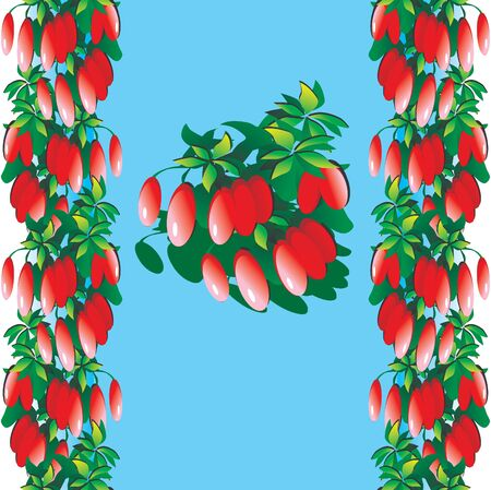 multivitamins: Barberry on a blue background. Healthy food. Place for your text. Vector art-illustration.