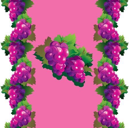 multivitamins: Purple grapes with green leaves on a pink background. Fruits pattern. Vector art-illustration.