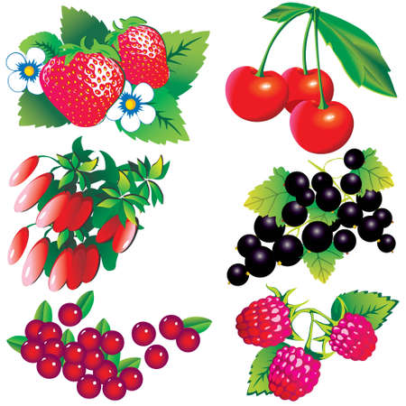 Berries collection art-illustration on a white background Stock Vector - 12842060
