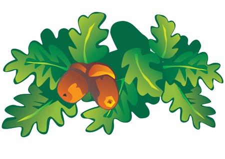 foglie di quercia: Foglie di quercia e ghiande Vector art-illustrazione su uno sfondo bianco