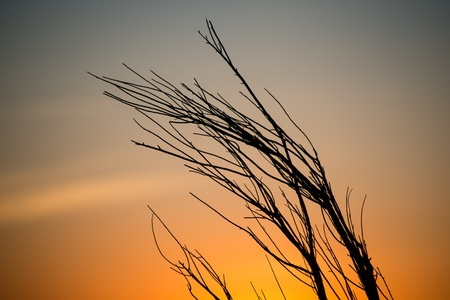 Sunrise through silhouetted branches