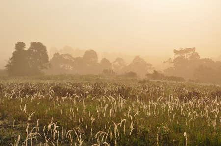 Grassland of Khao Yai national park, Thailand