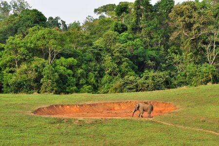 Asian Elephant of Khao Yai national park, Thailand  Stock Photo