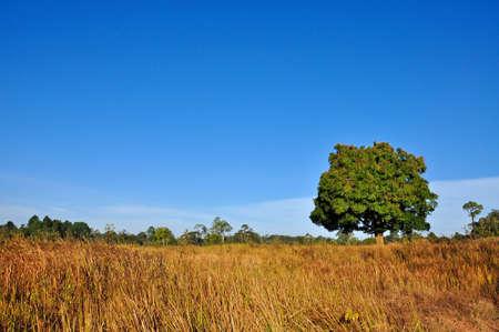 Dry grassland with blue sky, Khao Yai national park, Thailand