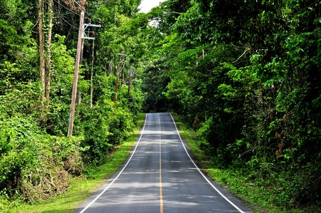 yai: Road along forest in Khao Yai national park, Thailand Stock Photo