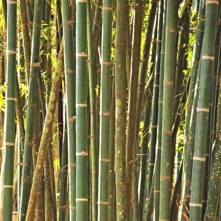 bosquet: Bosque de bamb�, Tailandia