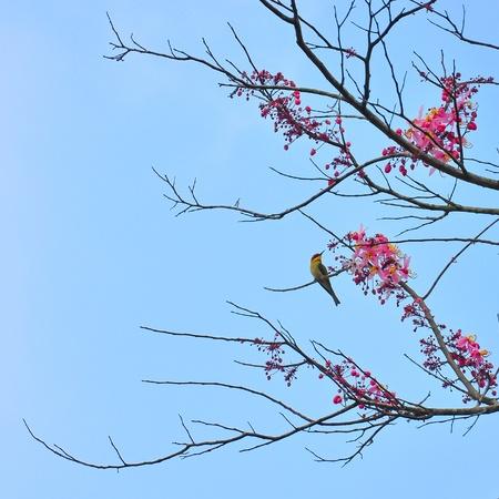yai: Chestnut testa di Bee-eater, Khao Yai National Park