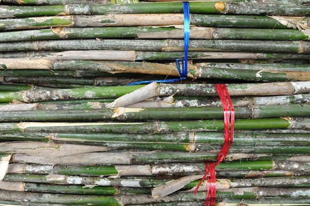 Stack of Bamboo for fench Stock Photo