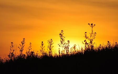 sunset at Khao Yai national park, Thailand Stock Photo - 11806275