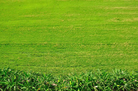 Green rice fields on top view, Bangkok, Thailand Stock Photo - 12672836