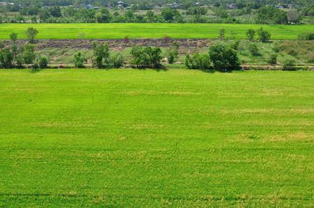 Green rice fields, Bangkok, Thailand Stock Photo - 12672835