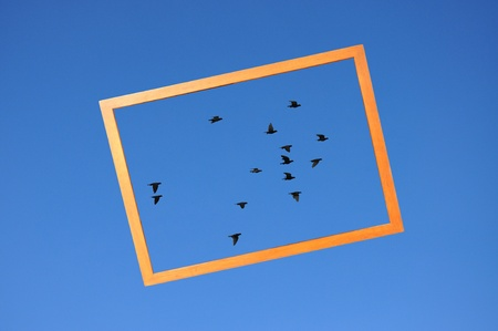 frame on a group of bird on clear blue sky background photo