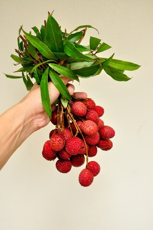 bunch of fresh lychees in man hand, Litchi chinensis Stock Photo - 12888620