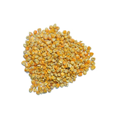 Corn seeds for animal feed isolated on white background Stock Photo - 13042900
